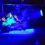 GEEDIAR® 36 LED Spot Led Submersible Ampoule / lampe LED étanche submersible Colorful aquarium sous-marin Spot Light pour Fish Tank avec 24 Télécommande IR Key (1.5w) de la marque GEEDIAR image 6 produit