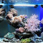 Glighone Lampe Led Aquarium 5.8W pour Poisson Eclairage Submersible Étanche Luminaire Sous-Marin Lumière Tube avec Interrupteur Néon Nano Accessoire Décoration Tank Bassin Pisicine 58cm de la marque Glighone image 4 produit
